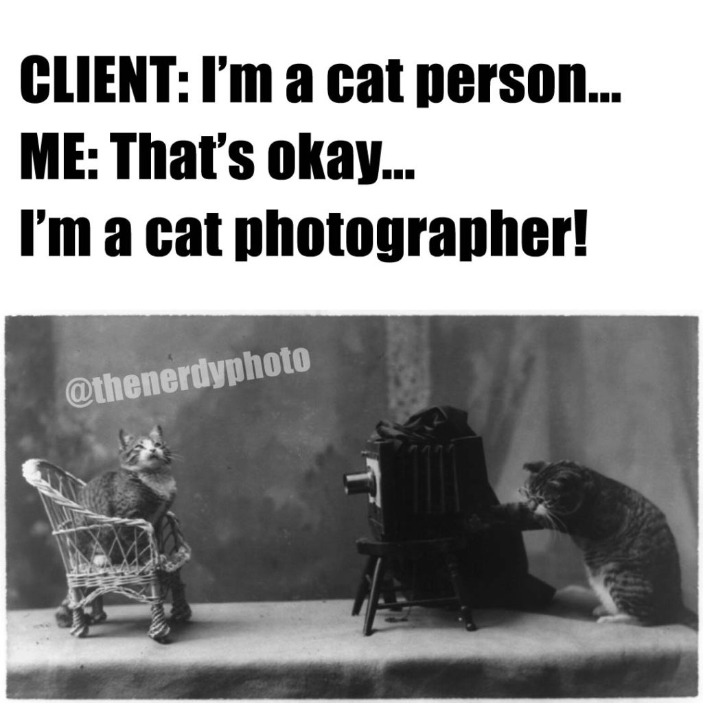 cat photographer meme